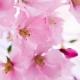 Definitia izolatelor naturale pentru parfumerie, stabilita prin vot majoritar de membrii organizatiei Natural Perfumers Guild