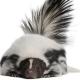 Note din parfumuri ce polarizeaza: capcauni olfactivi?