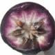 Chrysophyllum cainito - marul cu stea (caimitierul)