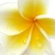Fata si marea: Musc Monoi noul parfum creat de Patricia Nicolaï Createur de Parfums